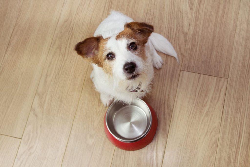 מזון יבש לכלבים בוגרים