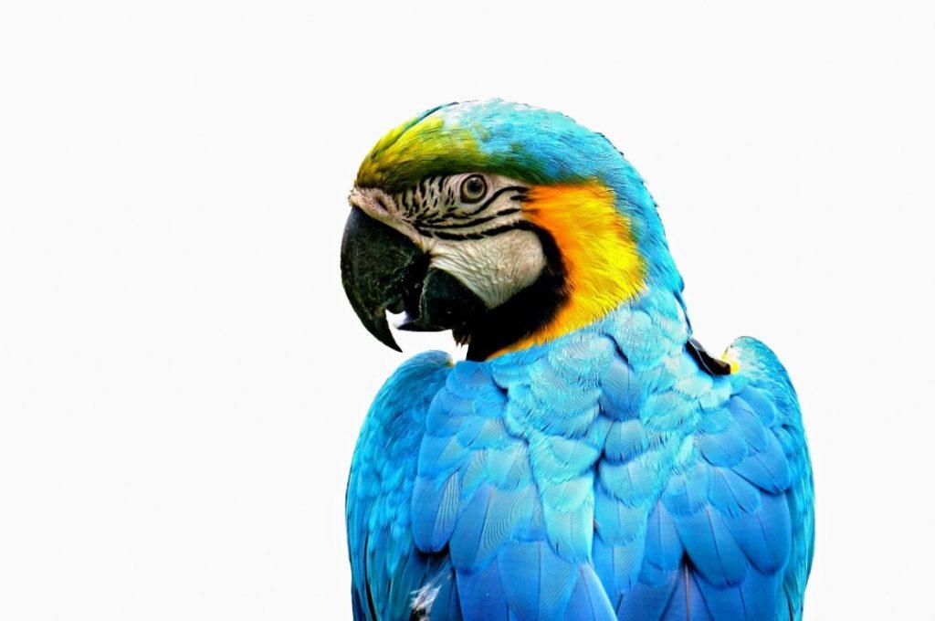 מזון וציוד תוכים ועופות